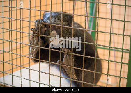 Sad monkey in a cage Stock Photo