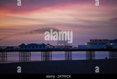 Brighton UK 5th February 2020 - Starlings create spectacular shapes over Brighton Palace Pier this evening at their daily murmuration at dusk . More fine settled weather is forecast for the next couple of days in Britain before stormy weather is set to arrive at the weekend  . Credit: Simon Dack / Alamy Live News