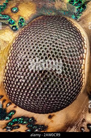 Extreme Macro of a stink bug eye - Stock Photo