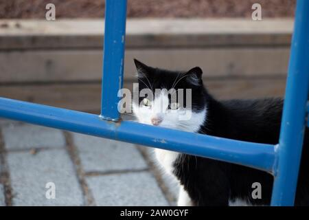 Cat with black and white patterns. Looks through the iron bars. Close up. - Stock Photo