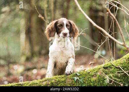Puppy standing on a fallen tree - Stock Photo