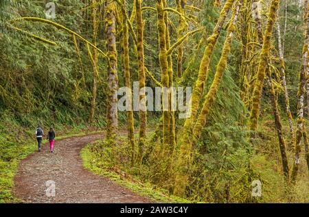 Temperate rain forest, Lake Serene Trail, Mount Baker-Snoqualmie National Forest, North Cascades, near town of Gold Bar, Washington, USA - Stock Photo