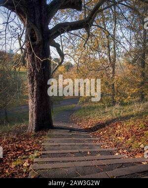 Autumnal high angle view of Greenwich Park in London, UK. - Stock Photo