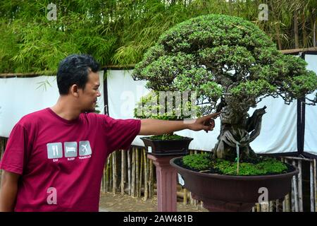Visitors see the plants at the location of the Bonsai contest held in Jember, East Java, Indonesia, Wednesday August 21, 2019. In the art contest, the plants dwarf these plants, in addition to achievement events, also as a venue for environmental promotion and increased creativity for the creative industry of Bonsai art. - Stock Photo