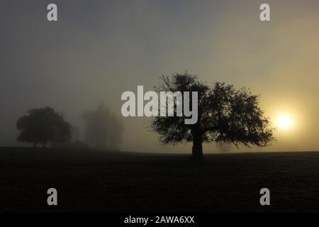 Silhouettes of Trees on a Misty Morning Sunrise near Durham, County Durham, England, United Kingdom. - Stock Photo
