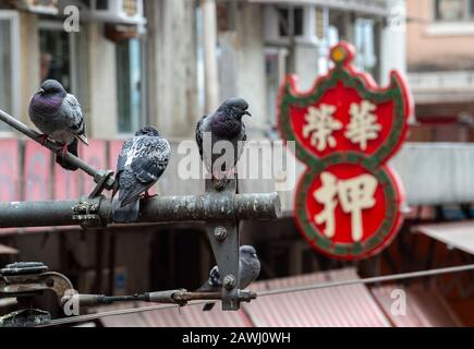 Hong Kong,China:29 Jan,2020.  Urban pigeons settle on areas around the North Point food market.Pawn office sign sits in the background. Jayne Russell/ - Stock Photo