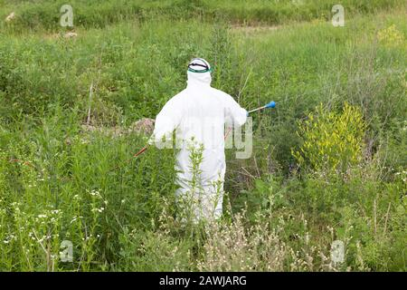 Man using herbicide to spray ragweed in a field - Stock Photo