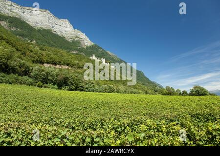 A low angle shot of the famous Fortress of Miolans overlooking a wide vineyard - Stock Photo