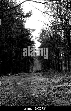 Forest of Dean Picture by Antony Thompson - Thousand Word Media, NO SALES, NO SYNDICATION. Contact for more information mob: 07775556610 web: www.thousandwordmedia.com email: antony@thousandwordmedia.com  The photographic copyright (© 2020) is exclusively retained by the works creator at all times and sales, syndication or offering the work for future publication to a third party without the photographer's knowledge or agreement is in breach of the Copyright Designs and Patents Act 1988, (Part 1, Section 4, 2b). Please contact the photographer should you have any questions with regard to the u