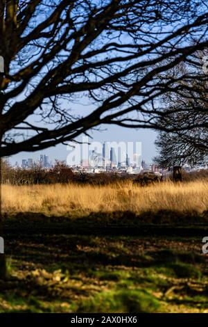 View of Central London and the City of London from Richmond Hill. Looking across the natural park grassland and oak trees in Richmond Park, London. - Stock Photo