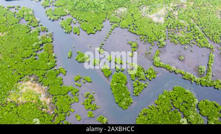 Mangrove forests and rivers, top view. Tropical background of mangrove trees. Philippine nature. - Stock Photo
