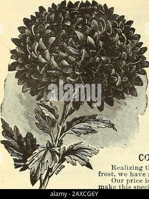 Illustrated hand book : Rawson's vegetable & flower seeds / W.WRawson & Co. . CHRYSANTHEAUA5. - Stock Photo