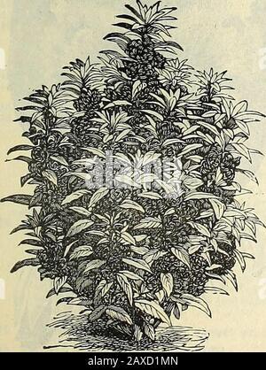 Illustrated hand book : Rawson's vegetable & flower seeds / W.WRawson & Co. . - Stock Photo
