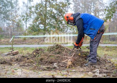 sawing a chainsaw tree while working in the forest - Stock Photo