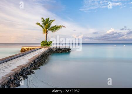A lone palm tree sits on the end of a pier with a blue sky at the stunning W Hotel in the Maldives