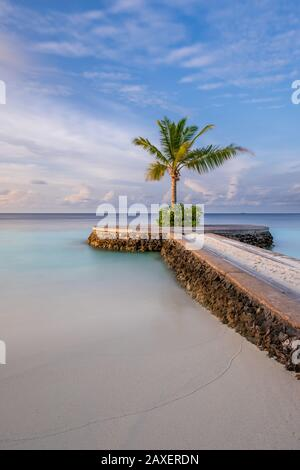 A portrait of a lone palm tree sits on the end of a pier at the stunning W Hotel in the Maldives