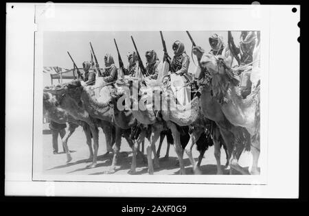 'English: Title: 'Coronation' of King Abdullah in Amman on May 25, '46. The Elite Camel Corps of the Arab Legion, passing saluting ba[se] Abstract/medium: G. Eric and Edith Matson Photograph Collection  Physical description: 1 negative :; Library of Congress Catalog: https://www.loc.gov/pictures/collection/matpc/item/mpc2010007708/PP Original url: https://hdl.loc.gov/loc.pnp/matpc.22548; Matson Collection; ' - Stock Photo