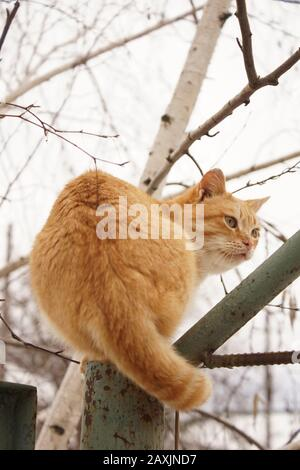 Ginger cat sitting on the old green fence in winter Stock Photo