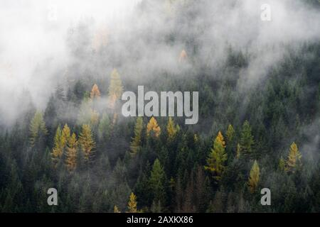 Autumnal fog over trees in the woods, Dolomites, Trentino-Alto Adige, Italy - Stock Photo