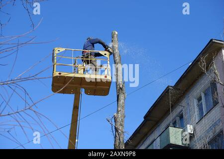 Municipal worker cutting dead standing tree with chainsaw using truck-mounted lift - Stock Photo