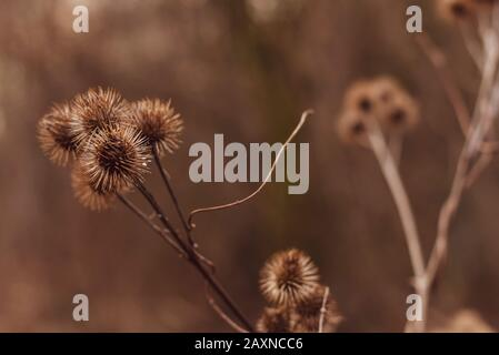 Silhouettes of old withered burdock, colorful, burdock seeds, abstract, sky and clouds, nice bokeh - Stock Photo