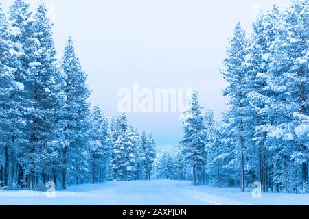 Finland, Lapland, winter, road, forest - Stock Photo