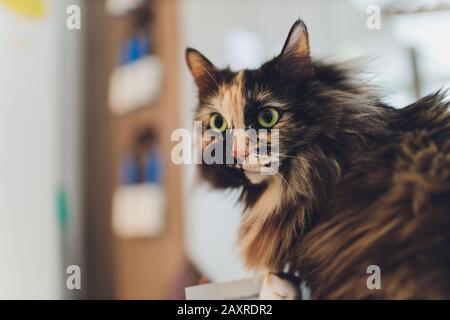 Kitten, resting cat on a flor in colorful blur background, cute funny cat close up, young playful cat at home, domestic, relaxing, resting,playing at