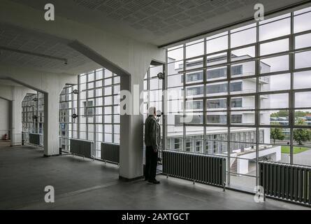 Dessau, Bauhaus, Walter Gropius  1925-26, Blick aus dem Werkstattflügel zum Prellerhaus mit Person - Stock Photo