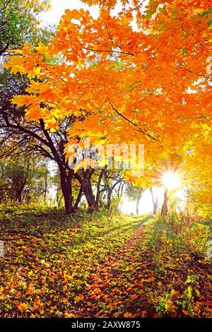Branches of bright autumn tree over a trail in the mountains in the rays of sunset sun - Stock Photo