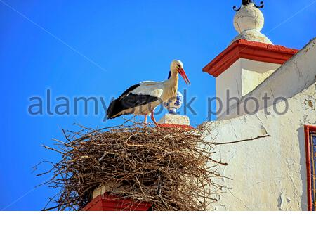 Stork in its nest installed in an old bell tower, on a sunny day, photographed from close up in southern Spain, Andalusia. - Stock Photo