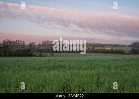 PLantation of rice - Stock Photo