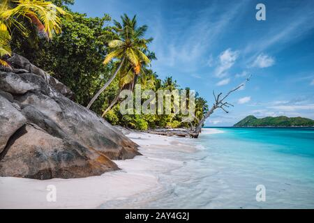 Daytrip to Therese Island. Mahe, Seychelles Coconut palm trees on tropical secluded sandy beach, blue lagoon against a blue sky
