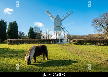 Shetland pony at Lowfield Heath Windmill, a grade II listed post mill at Charlwood, Surrey, UK. Visitor attraction