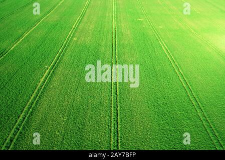 Perspective aerial landscape view of fresh green agricultural fields. Top down view from above, tractor tracks in perfect geometric lines. - Stock Photo
