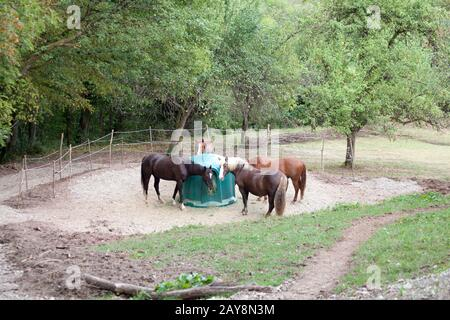 Horses feeding outside with Hay Rack - Stock Photo