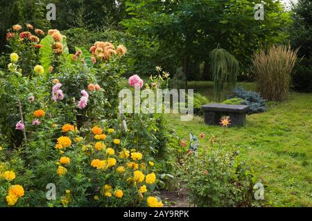Yellow Tagetes - Marigold and pink and orange Dahlia flowers with charcoal coloured stone sitting bench in backyard garden in late summer.
