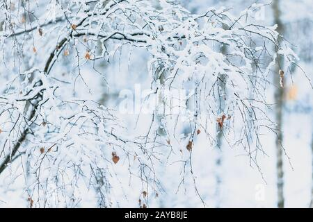Winter snowy day in a beautiful at the edge of the forest - Stock Photo