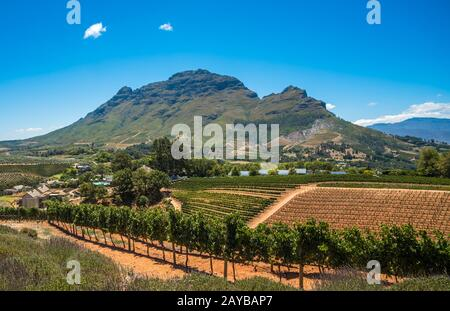 Beautiful landscape of Cape Winelands, wine growing region in South Africa - Stock Photo