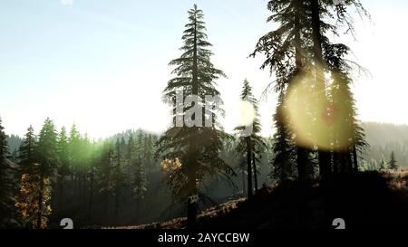 Early morning light and fog drifting through the trees - Stock Photo