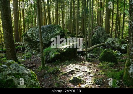 rocks in the forest on the swabian alb - Stock Photo