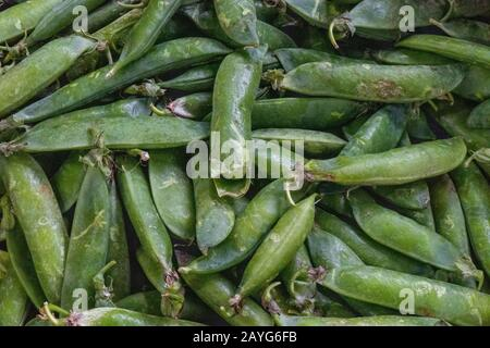 freshly picked peas with the shells or shucks on ready for shucking and eating. - Stock Photo
