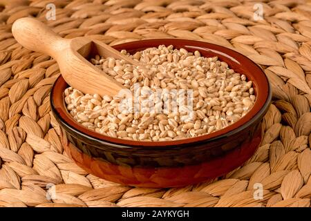 Pearl barley, or pearled barley, in a scoop, in a bowl, with front to back focus. - Stock Photo