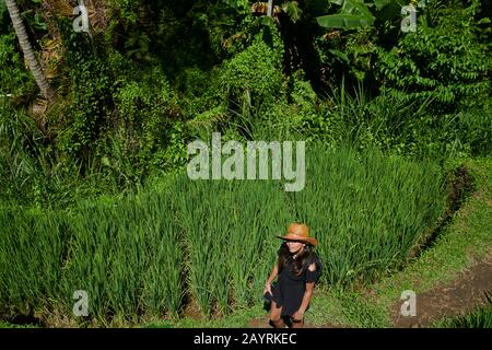 Teenage Asian girl enjoying exploring the rice paddy terraces in Bali on a hot day in bright summer sunshine - Stock Photo