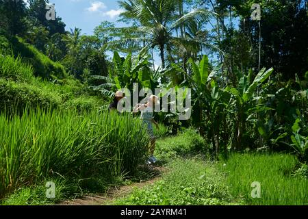 Two young Asian girls enjoying exploring the rice paddy terraces in Bali on a hot day in bright summer sunshine - Stock Photo