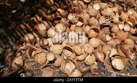 Medium close up shot of a pile of coconut shells on the ground being prepared for processing into charcoal in the Philippines. - Stock Photo
