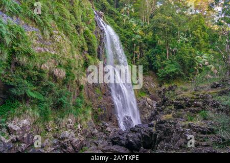 Beautiful forest landscape with waterfall nature background. Red Cedar Falls in Dorrigo National Park, Australia - Stock Photo