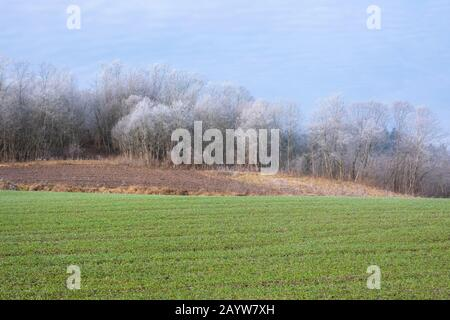 Frosty trees in agricultural fields. Hoar frost on trees lit by morning sunlight - Stock Photo