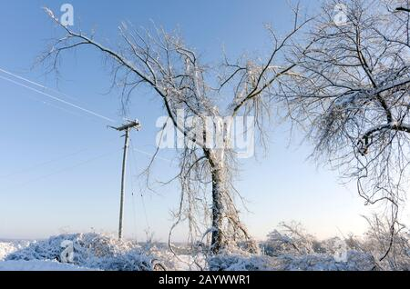 Heavy snow clinging to bushes trees and power lines on wintry morning - Stock Photo