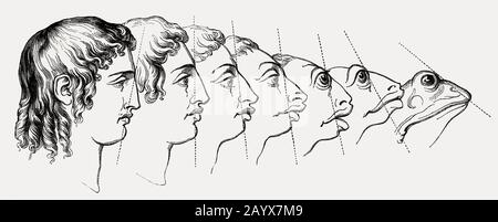Human face changing into frog, Heads of Men and Animals Compared by Grandville - Stock Photo