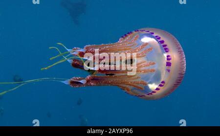 Jelly fish family Stock Photo: 310898502 - Alamy